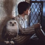 GLI ANIMALI DI HARRY POTTER